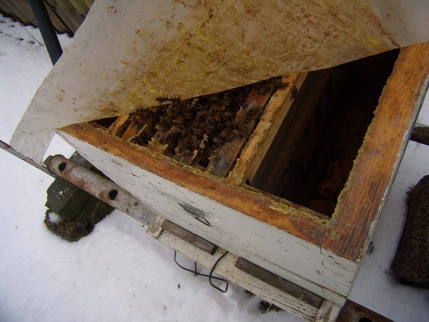 Контроль зимовки пчел