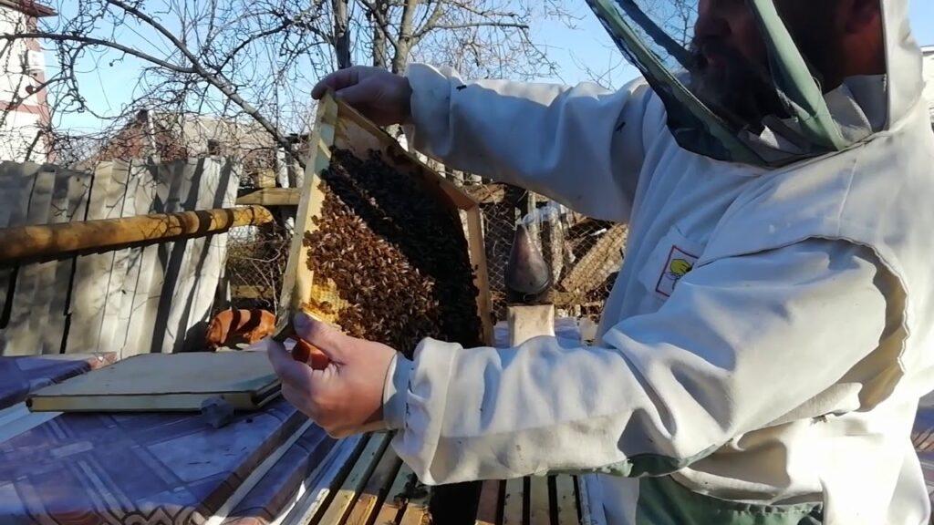 Особенности подготовки пчел к зиме