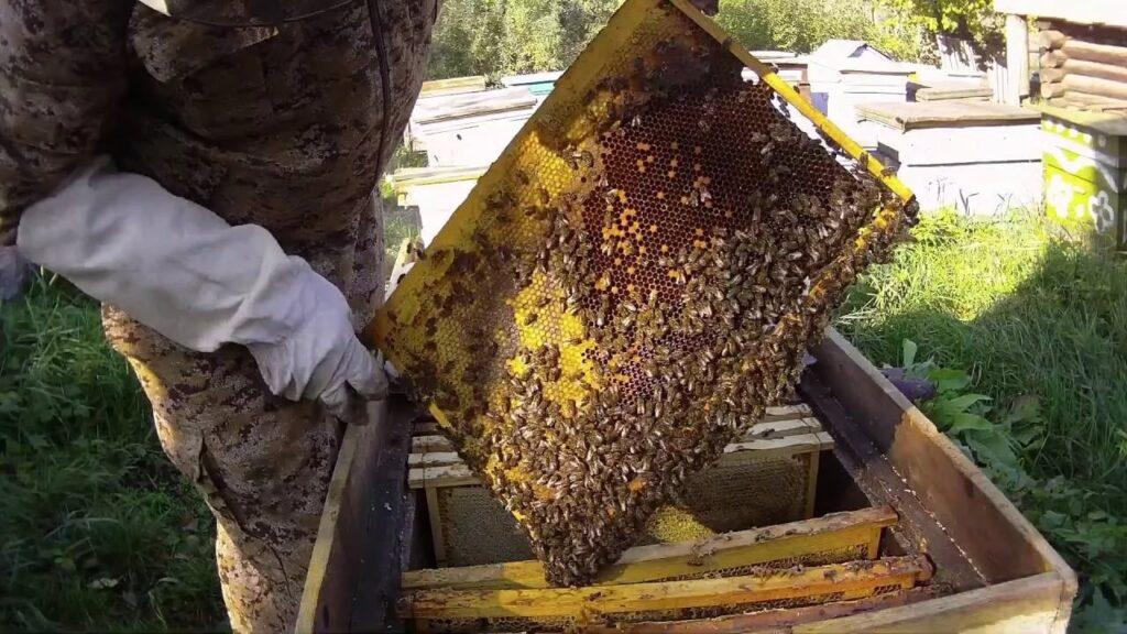 Правильная сборка пчеловодом гнезда пчел на зиму