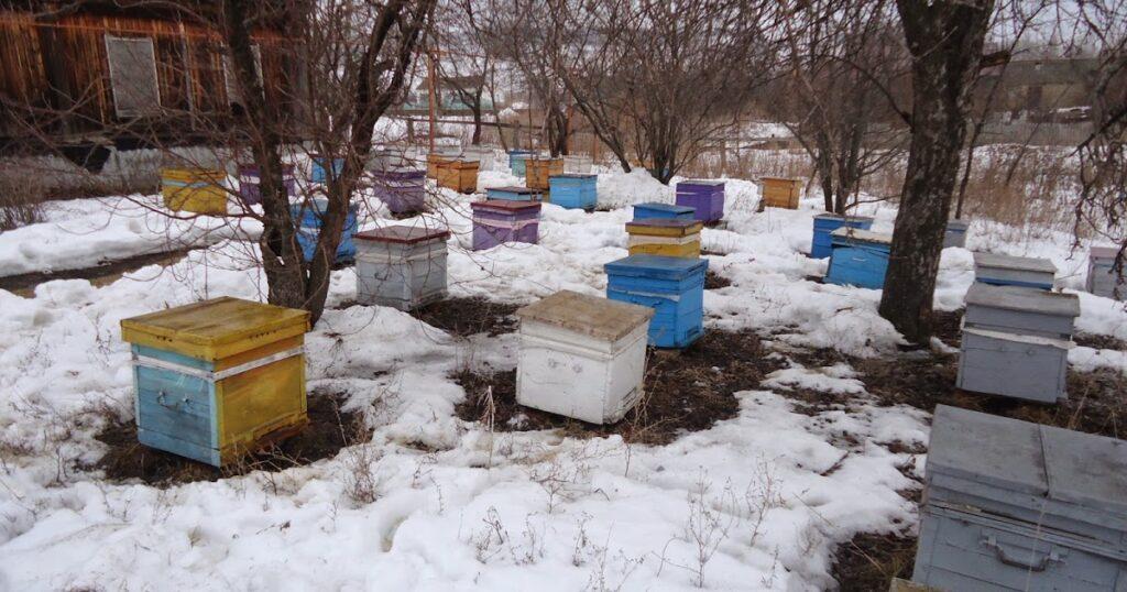 Ранняя выставка пчел