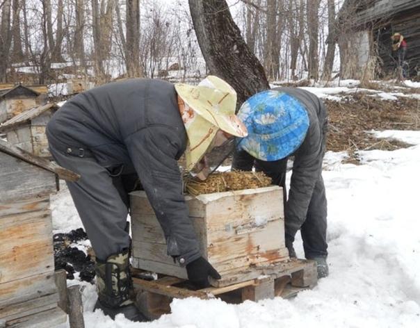 Уход за пчелами, которые зимуют на улице
