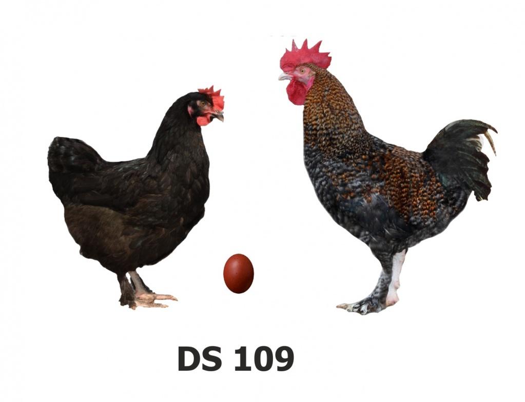 Черный Д 109