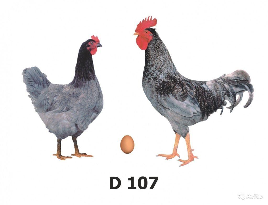 Голубой Д 107