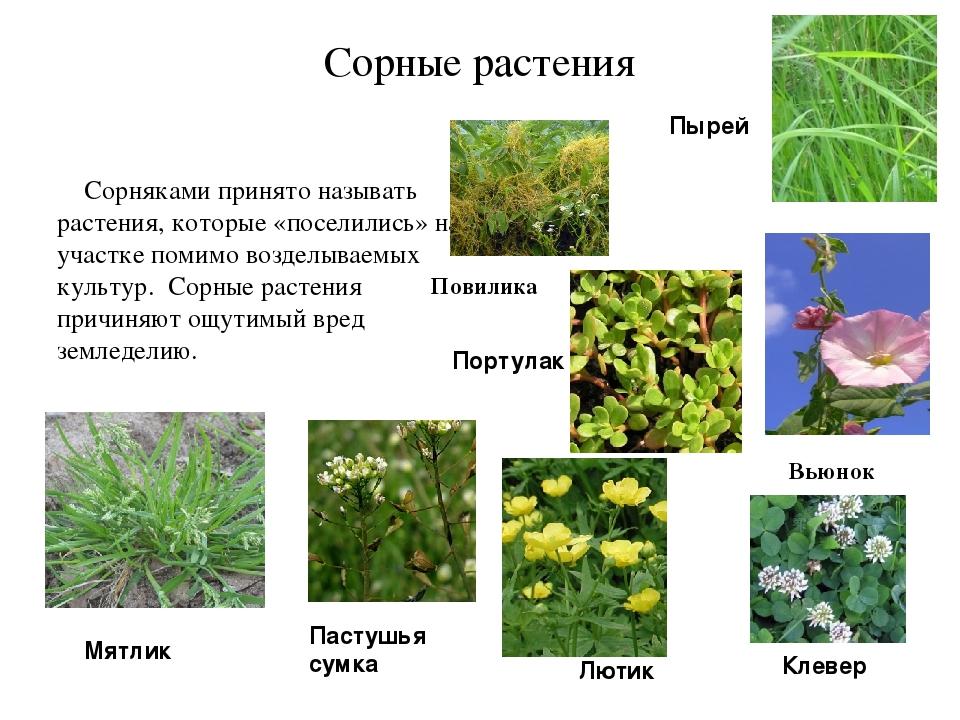 Группы сорняков