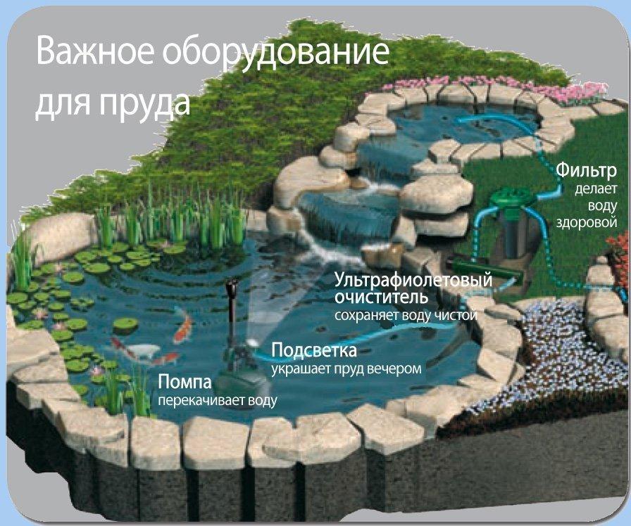 Количество и состав воды в пруду