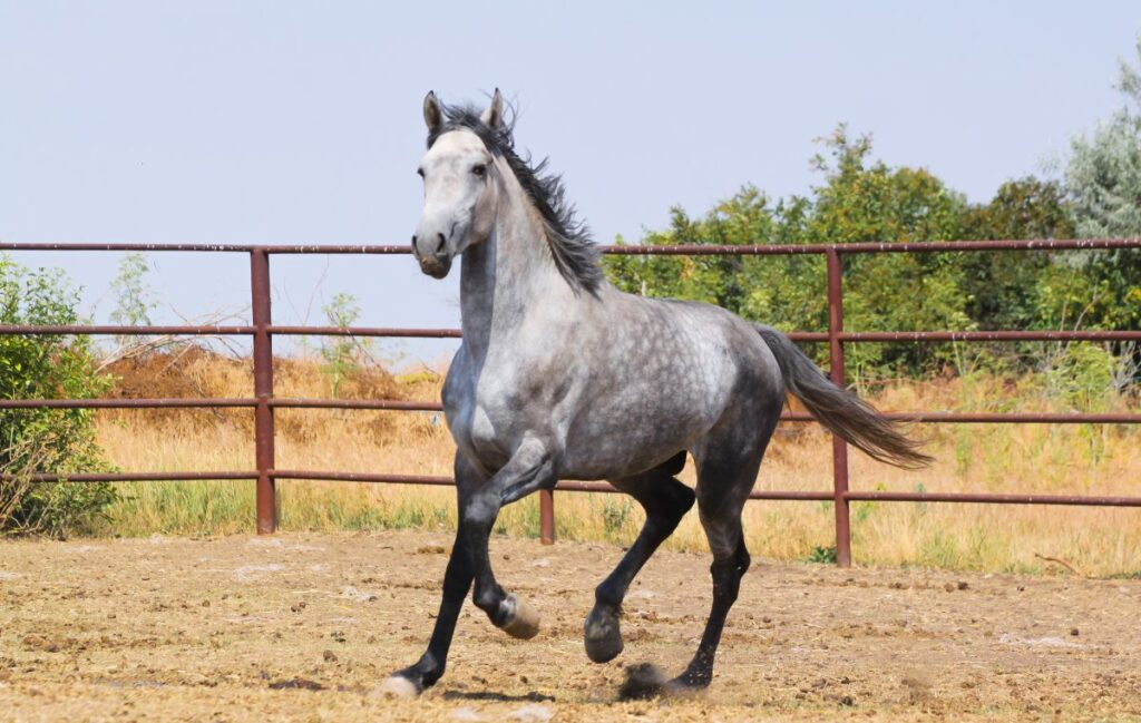 Конь Аякс