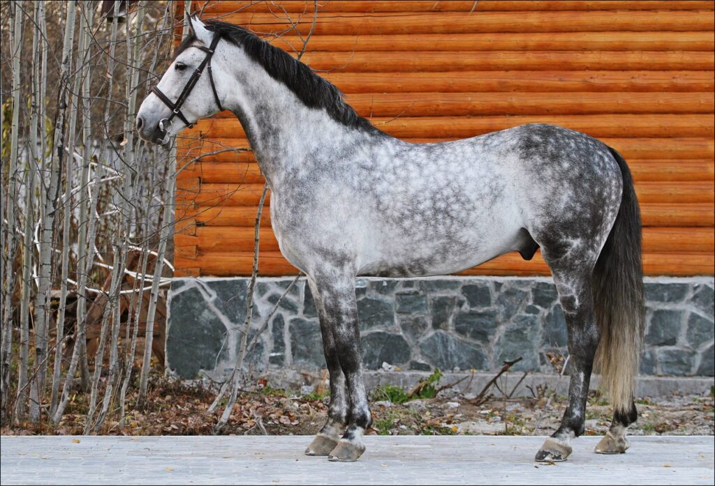 Конь Орловский