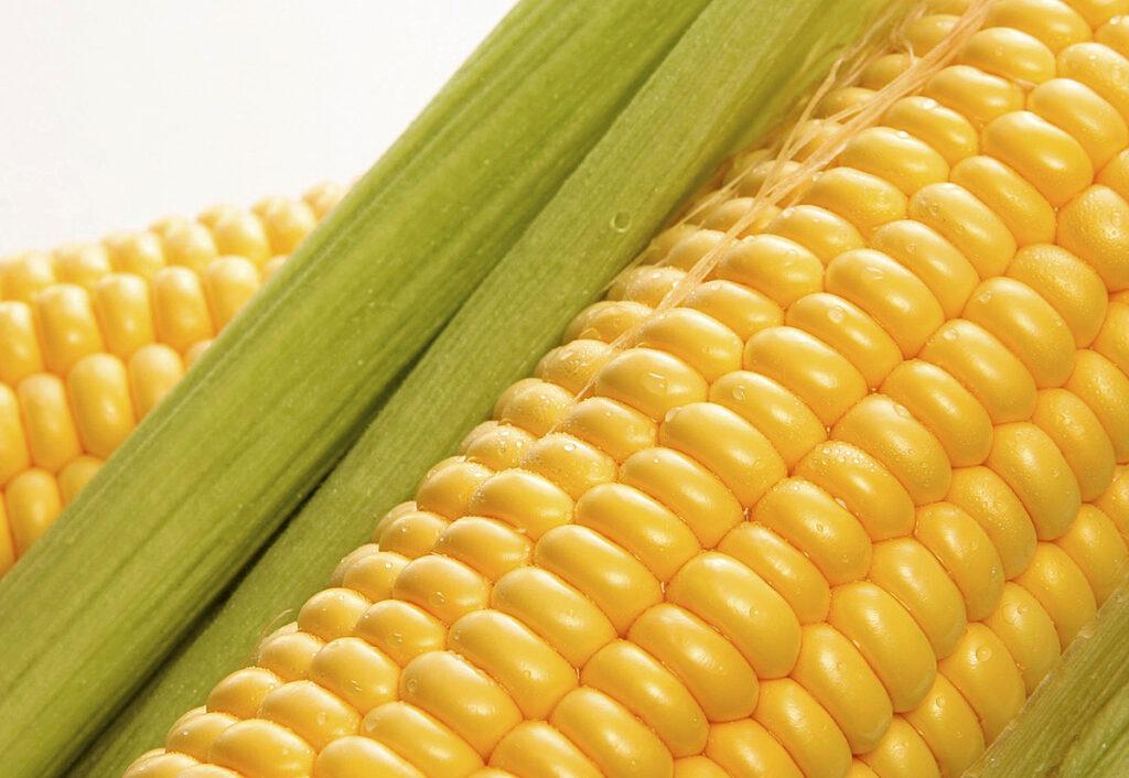 Кукуруза Любава 279 МД