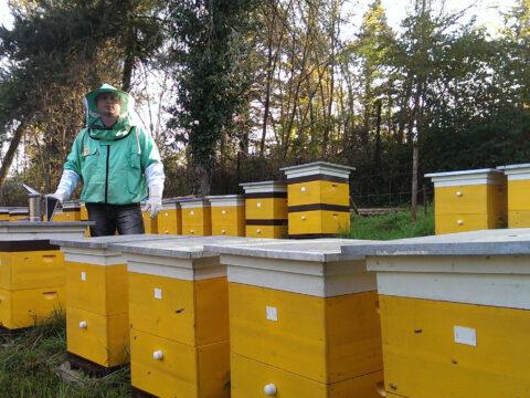 Улей для пчел. Какой выбрать