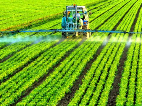 Система агротехники овощей, картофеля и грибов