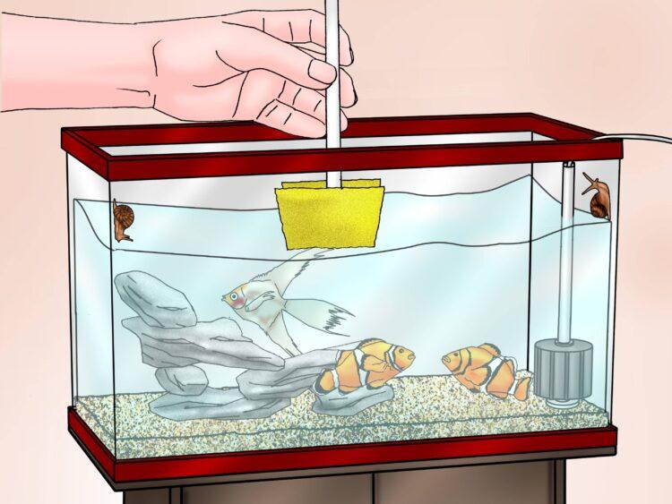 Правила ухода за аквариумом