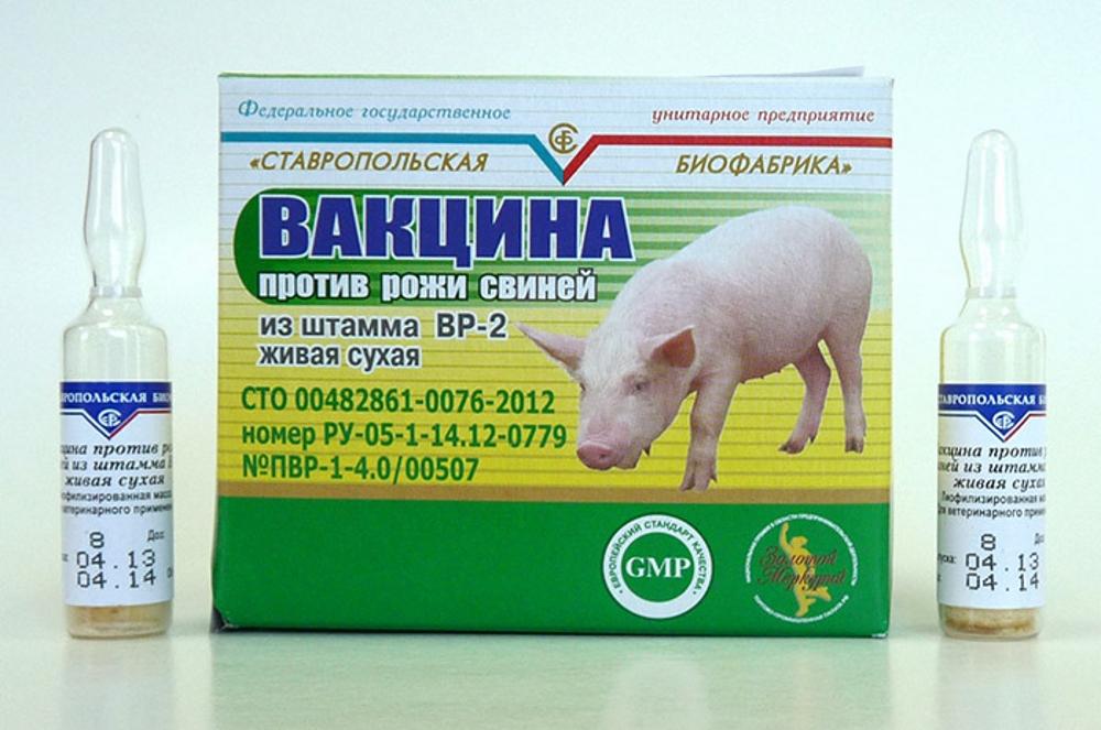 Вакцина против рожи свиней