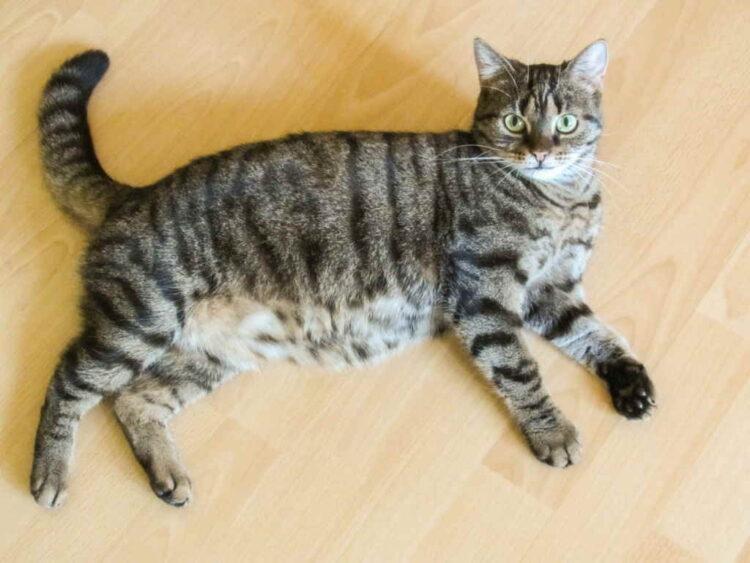Беременность у кошки. В ожидании чуда