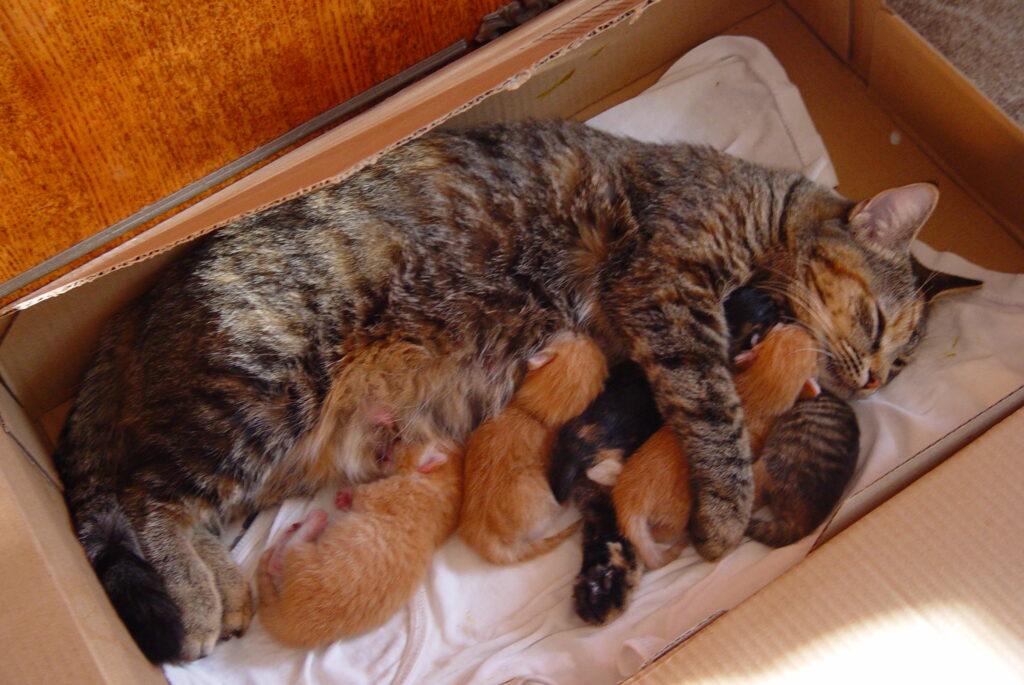 Как ухаживать за кошкой после родов