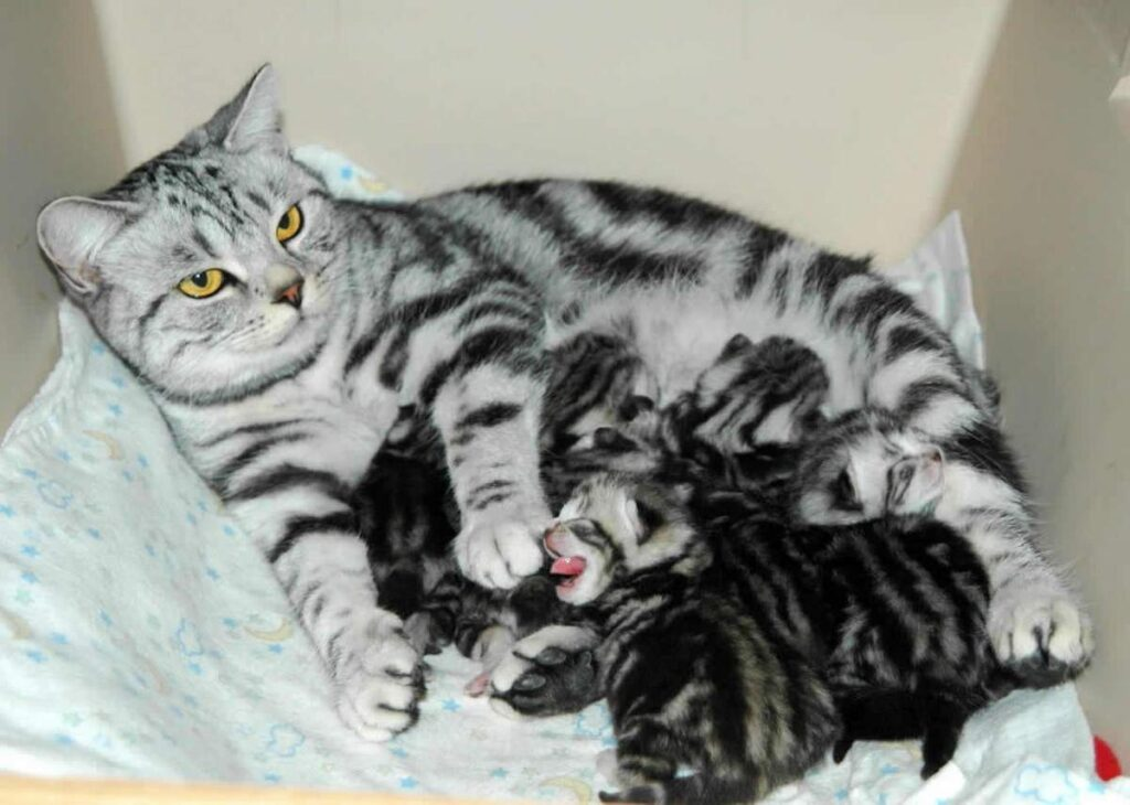 Сколько месяцев длится беременность у кошек