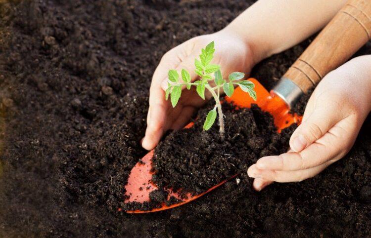 Как подготовить почву для рассады?